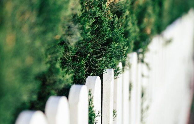 WeWrite Blog De Communique De Presse Immobilier Branches Pin Cloture Bois Blanc 1372 71