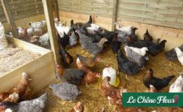 WeWrite Blog De Communique De Presse Immobilier LE CHENE FLEURI SHOP Ancenis Maine Et Loire 49 Mv Accueil 24